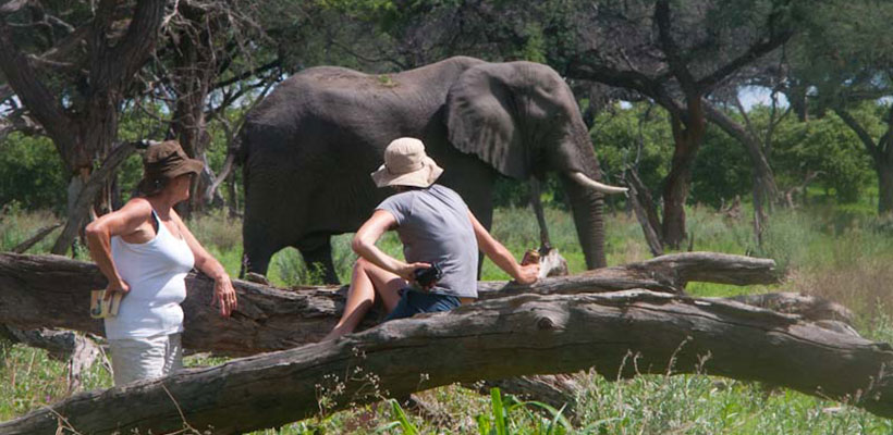 An elephant visiting our camp on safari with Okavango Expeditions