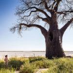 Visiting Baines Baobabs on safari with Okavango Expeditions