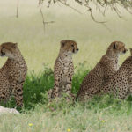 Meet Okavango Expeditions guides