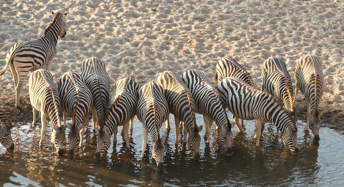 10 Best National Parks In Botswana 2021